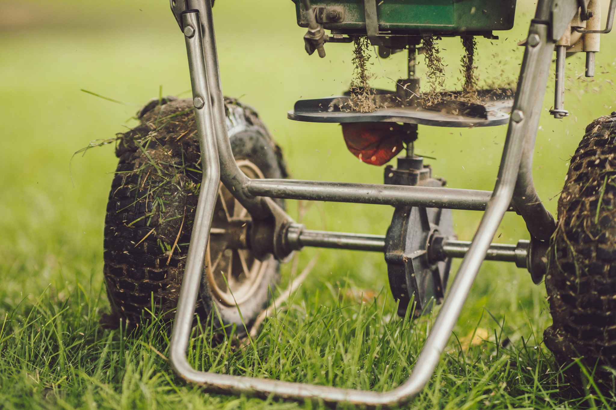 lawn care aeration and overseeding